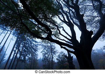 autumn foggy forest in dusk - autumn foggy forest with tree...