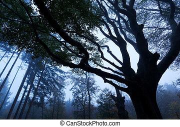autumn foggy forest in dusk - autumn foggy forest with tree...