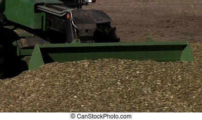 Harvested Corn In Silo