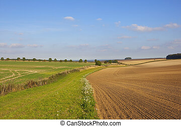yorkshire wolds agriculture - cultivated fields beside a...