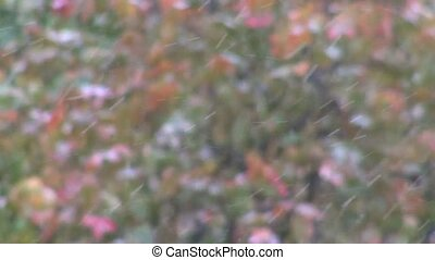 First snow on a background of blurred foliage - First snow...