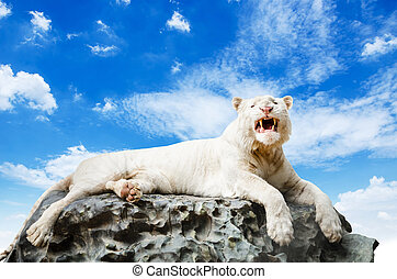The White tiger - The White tiger on rock with blue sky...