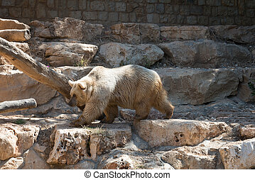 Bear at Haifa Zoo - Haifa Zoo, Israel