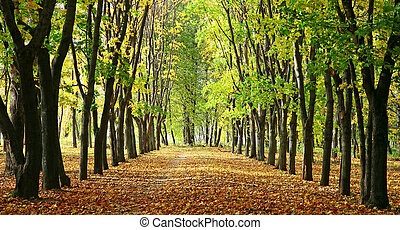 Alley in a park with colorful trees