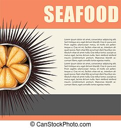 Seafood poster with sea urchin illustration