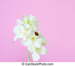 jasmine flower on pink background close-ups