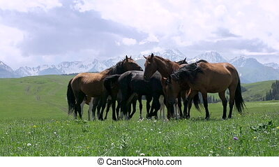 Herd in the Picturesque Foothills - Herd of horses grazing...