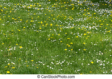 grassy field with wildflower