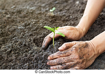 Woman hand watering and protect young tree on soil...