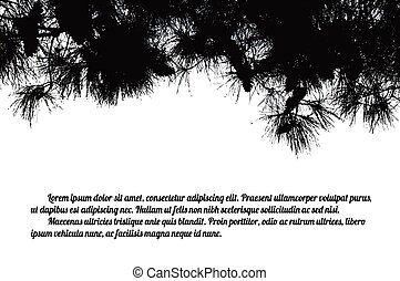 Pine branch tree on white background with space for your...