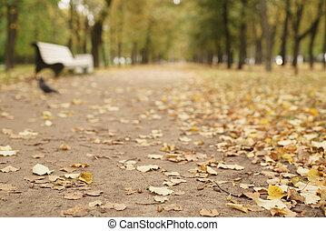 closeup low angle shot on autumn alley