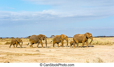 elephant family - The elephants is walking to cross a road...