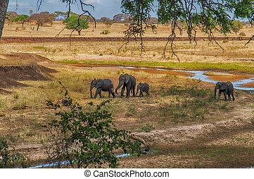 Elephant Herd walking in the Serengeti, Tanzania