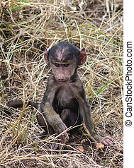 baboon baby - a very young baboon discovers the world Lake...