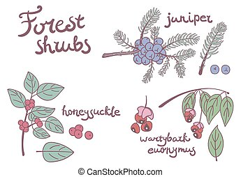 Forest set of wild shrubs. Honeysuckle, juniper, wartybark...
