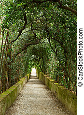 Boboli gardens - green tree alley in Boboli gardens,...