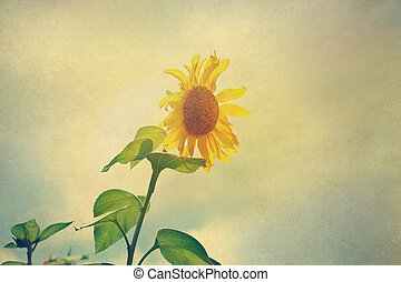 Abstract sunflowers in the sunshine on paper grain, vintage...