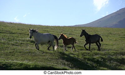 Horses Skip the Hill - Slow Motion Foal with parents quickly...