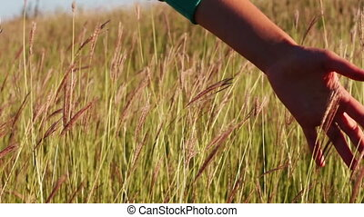 Girl hand touch the grass in the field meadow. - A man's...