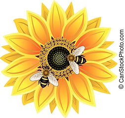 sunflower and bee vector EPS 10