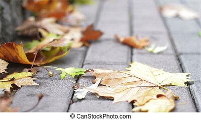 Fallen Leaves on the Sidewalk