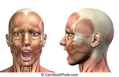 3D male medical figure showing mandible depression front and side view