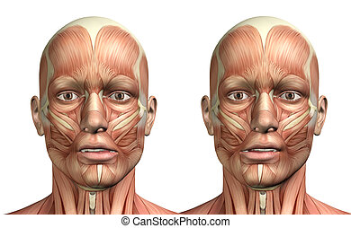 3D male medical figure showing mandible lateral deviation -...