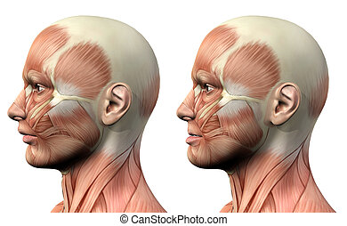 3D male medical figure showing mandible protusion and...