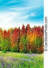 Forest. Autumn landscape