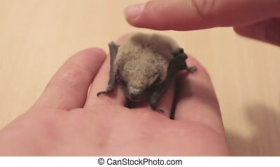 Man is holding a bat in his hand on the palm. - Little gray...