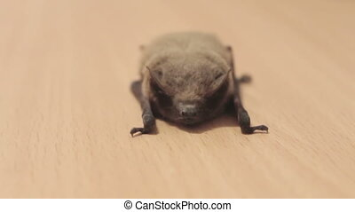 The bat lies on the ground. - Little gray bat lays and...