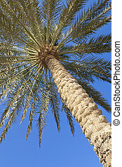 Palm Tree Against a Perfect Blue Sky