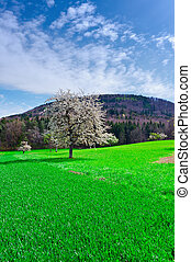 Flowering Trees Surrounded by Sloping Meadows in Switzerland