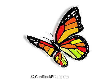 Colorful butterfly - A very colorful butterfly as symbol of...