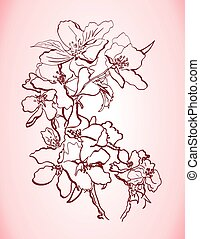 apple flowerseps - hand drawn apple tree branch