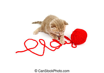 play cat - cat play in red wool