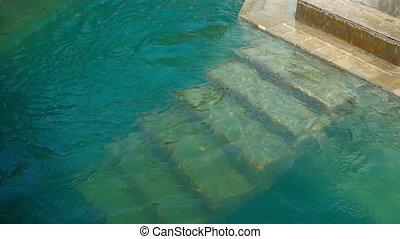 Polar bears - Polar bear swimming in the pool