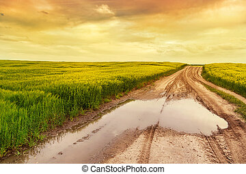 Summer landscape with green grass, road
