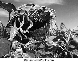 plants in catastrophe