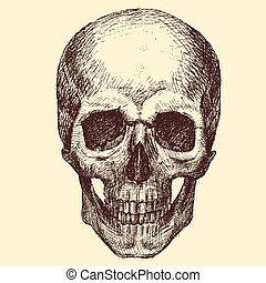Vector Skull - Beautiful vector image with nice skull with...