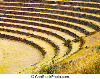 Terraced fields as a part of incan agricultural system in...