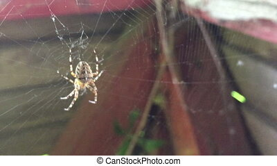 Spider on the web twitching in the wind Static shooting...