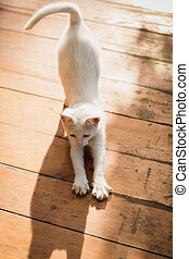 white kitten stretching on wooden floor at sunny day - Cute...