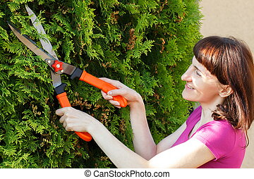 Woman uses gardening tool to trim bushes, seasonal trimmed...