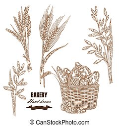 Cereals set Hand drawn sketch illustration wheat, rye, oats,...