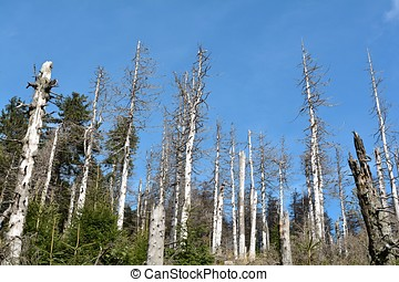damaged trees - from bark beetle damaged trees in the Harz...