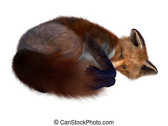 Red Fox - 3D digital render of a red fox sleeping isolated...