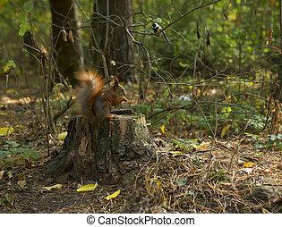 Forest animals: Squirrel and bird