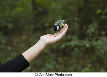 Chickadee Eats with Palms, Bird perched on a Woman's Hand...