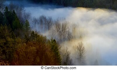 Time Lapse of thick rolling fog 4k - jonsrud, sandy, oregon,...
